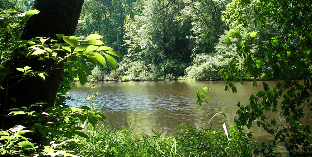 The Upper Pond at Timberlake Earth Sanctuary